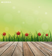Natural background. Fresh spring green grass with red flower and