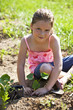 Young girl planting a sweet pototo slip