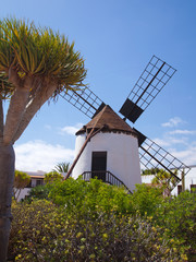 Central Fuerteventura, windmill
