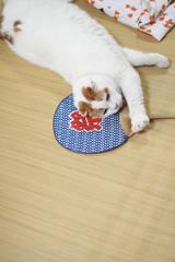 夏の猫の昼寝