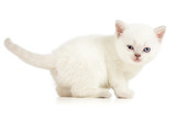winking white kitten