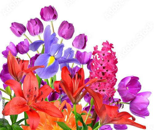 Spring flowers isolated on white background