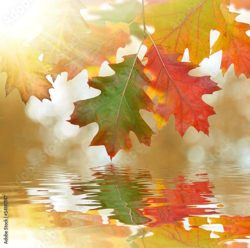 Fototapeta Autumn oak leaves mirrored on water level