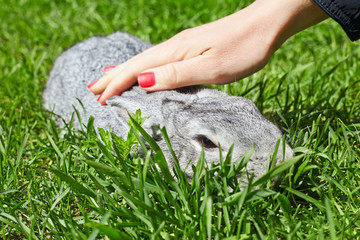 Female hand strokes rabbit sitting in grass