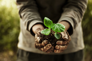 farmer hands holding a plantlet.