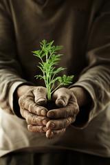 farmer hands holding a plantlet.