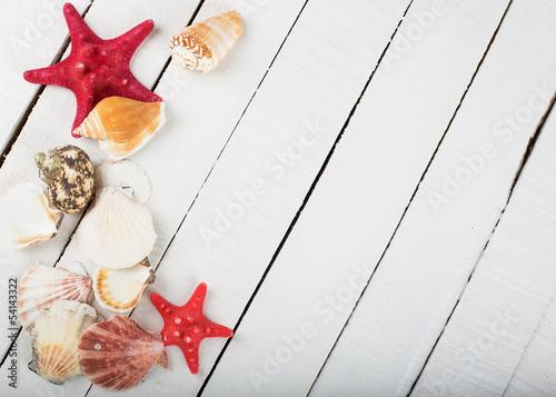 Muscheln, Seesterne und Ozeanschätze