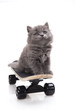 Little gray kitten, Skateboard