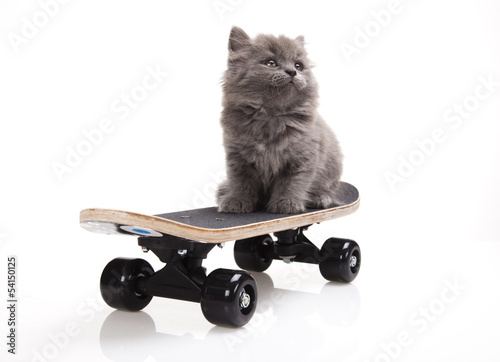 Poster Skateboard, Little gray kitten