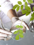 Science experiment with plant laboratory