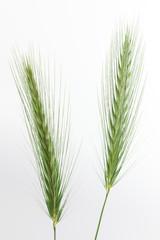 Gras Rispen