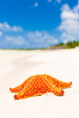 Starfish (sea star) at a tropical beach
