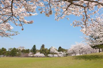 奈良公園のさくら