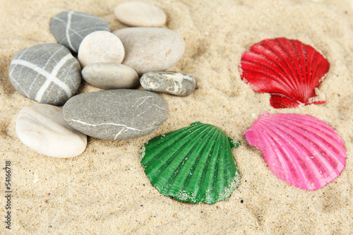 Colorful seashells on sand background