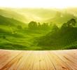 Tea farm - 54169145