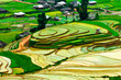 Rice field of terraced in VietNam