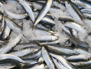 Fresh sardines, mackarels catch in a box on fish market