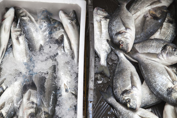 Fresh sea breams and sea bass and on market stall