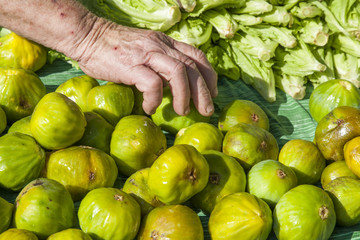 Person picking up delicious bright green figs