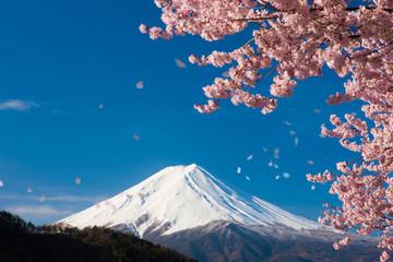 富士山と舞い散る桜