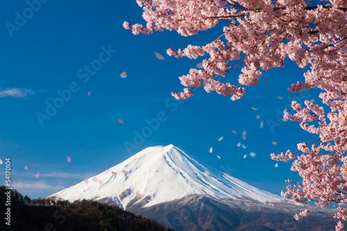 Foto op Plexiglas Kersen 富士山と舞い散る桜
