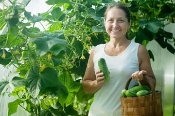 woman picking cucumbers