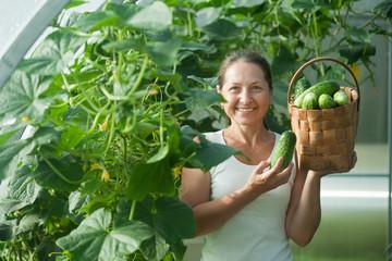 woman   harvesting cucumbers