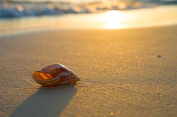 夕日の前浜ビーチと貝殻