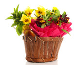 Beautiful pansies in wooden basket isolated on white