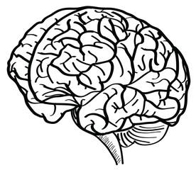 Human Brain Vector Outline Sketched Up.