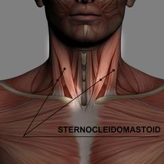 sternocleidomastoid