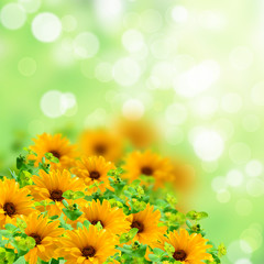 Yellow flowers on the blurred background