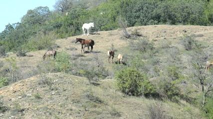 horse is grazing