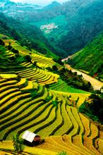 Pola ryżowe z dobudówką w Wietnamie