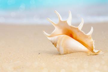 seashell on beach sand