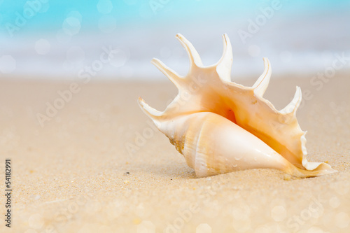 seashell on beach sand - 54182991