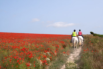 Horses riding through poppies