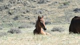 funny foal swinging in the grass
