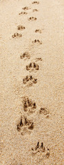 Dog Footprints on the Beach