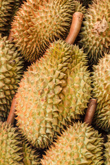 Durian fruit of Thailand.