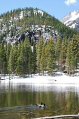 Canards sur Nymph lake, Rocky Mountain National Park, CO, USA