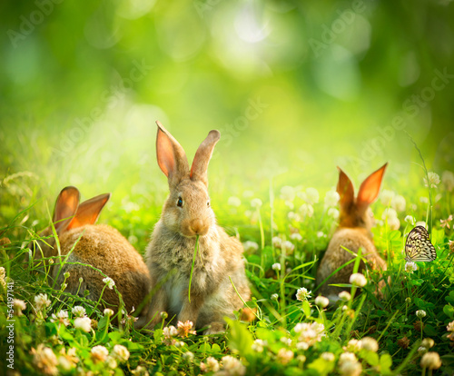 canvas print picture Rabbits. Art Design of Cute Little Easter Bunnies in the Meadow