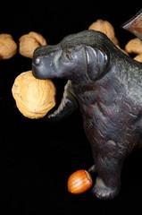 Dog nutcracker with walnut © Arena Photo UK