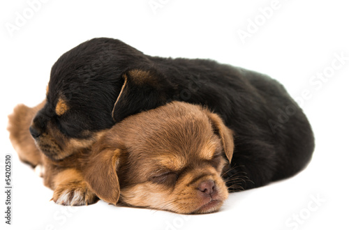 sleeping puppies isolated