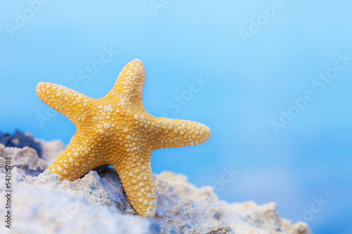 Yellow starfish on a rock in front of the sea.