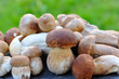 A group of Boletus Edulis on a natural background