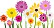 Blumen 140713
