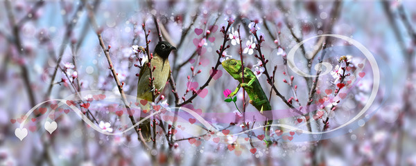 Chameleon in love