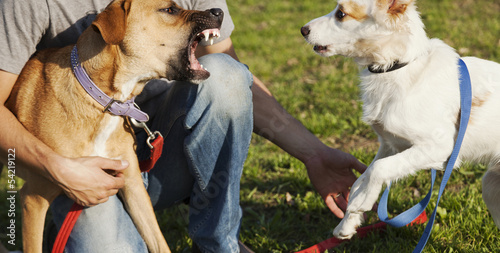 Two Dogs and Trainer Playing in Park