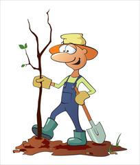 Gardener plants a tree